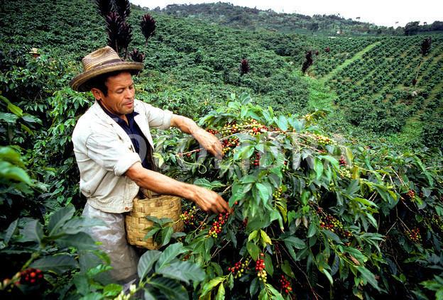 kawa z kolumbii