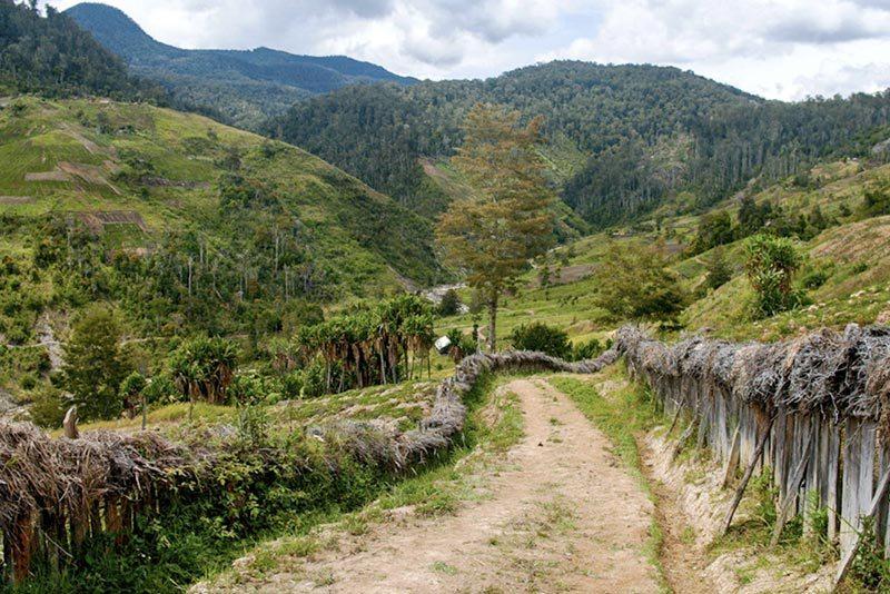 arabica papua nowa gwinea