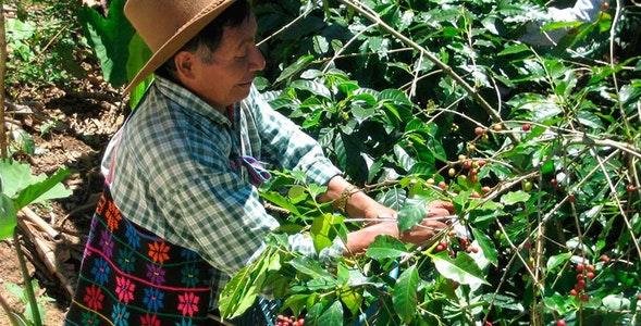 kawa gwatemala
