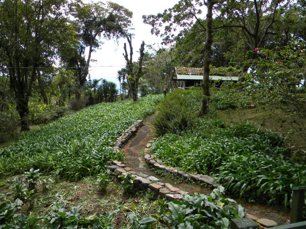 uprawa kawy w nikaragua