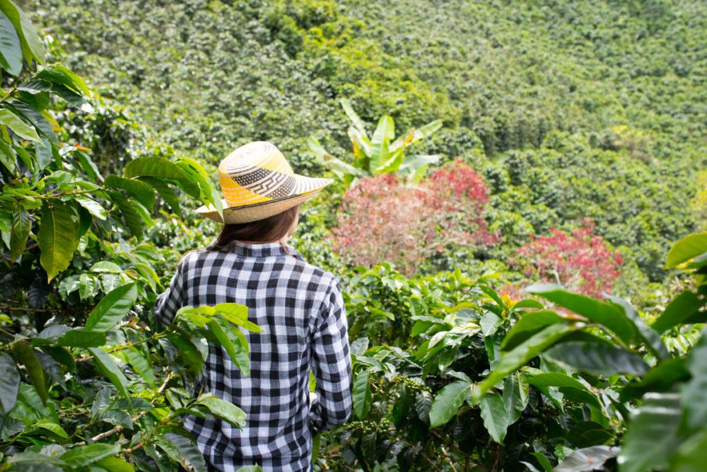 kawa na jamajce