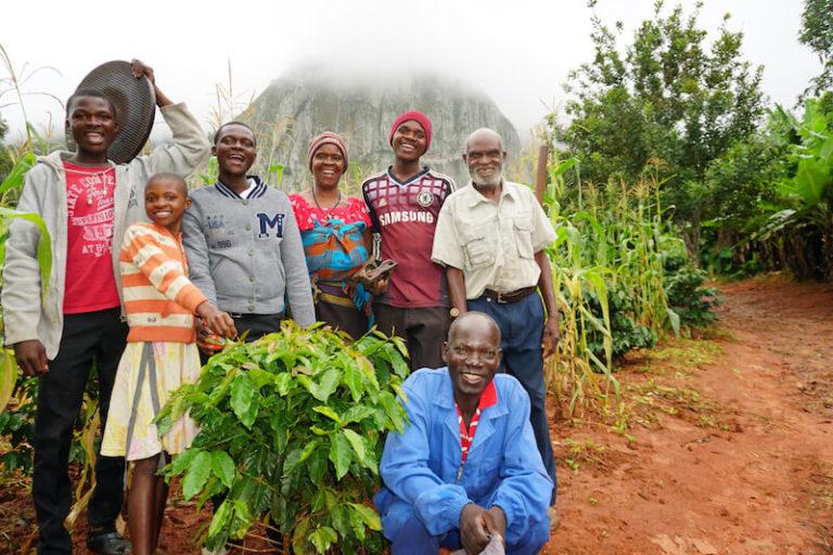 plantacja kawy z zimbabwe