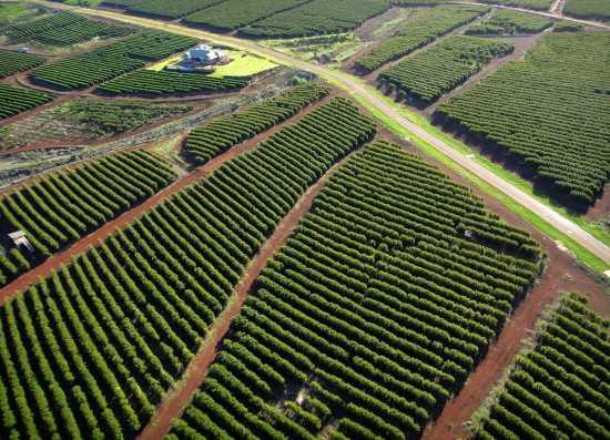 plantacje kawy w keni