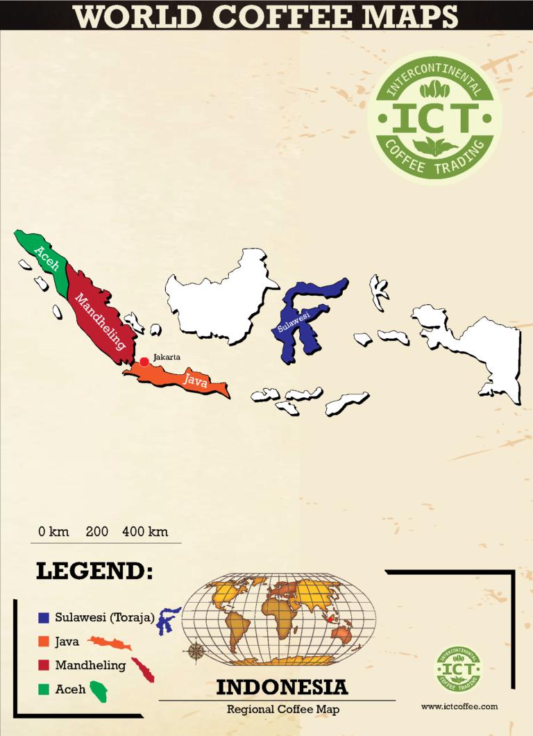plantacja kawy z indonezji