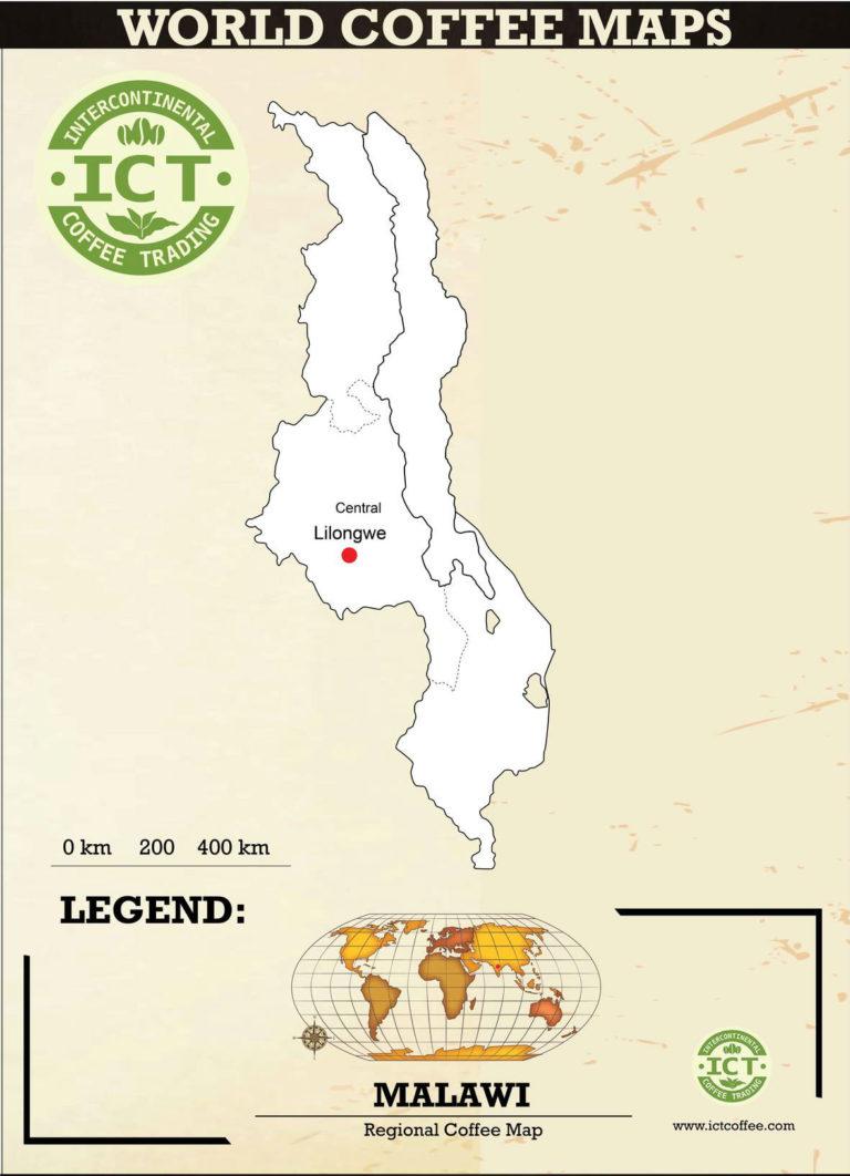 plantacja kawy z malawi